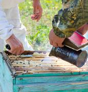 beekeepers at work - stock photo