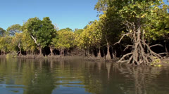 Mangroves Tidal on Inhaca Island Mozambique PAL Stock Footage