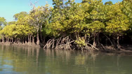 Stock Video Footage of Mangroves Tidal on Inhaca Island Mozambique PAL