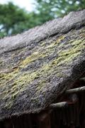 Thatch roof with moss Stock Photos