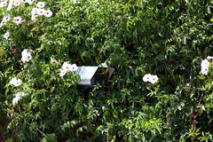 Security camera hidden in greenery Stock Photos