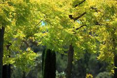 Leafy trees with yellow foliage Stock Photos