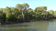 Stock Video Footage of Mangroves Tidal on Inhaca Island Mozambique NTSC