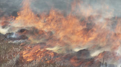 Flames during a veld fire Stock Footage