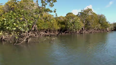 Mangroves Tidal on Inhaca Island Mozambique NTSC Stock Footage