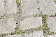 Cobblestone with Grass Texture - stock photo