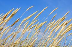 Beach flora Stock Photos