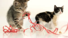 Kittens playing Stock Footage