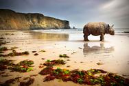 Beach rhino Stock Photos