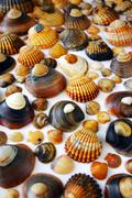 shell background - stock photo