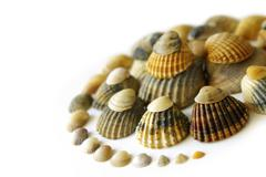 shell spiral - stock photo