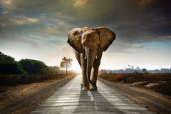 walking elephant - stock photo