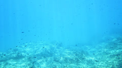 underwater shot - stock footage