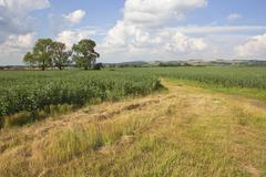 yorkshire wolds landscape - stock photo