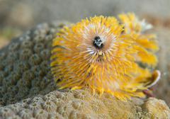 An atlantic ocean species of marine animal. Stock Photos