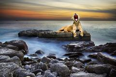 Surreal lioness Stock Photos