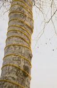 Decorated plane tree trunk Stock Photos