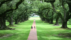 Beautiful Canopy of Huge Oak Trees and Path - stock footage