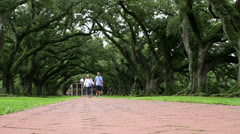 Couple Walking Under Beautiful Canopy of Huge Oak Trees and Path - stock footage