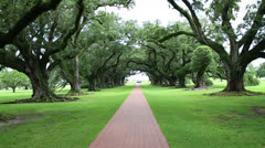 Beautiful Canopy of Huge Oak Trees and Path (steadicam) - stock footage