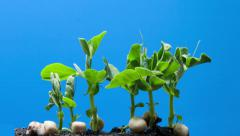 Growth Stock Footage