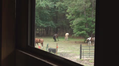 Barn Window View With Horses In Pasture 2 Stock Footage