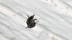 Beetle stuck In Spider Web Trying to Escape Stock Footage
