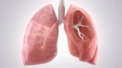 Breathing HD Lungs Stock Footage