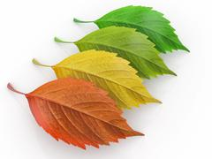 Stock Illustration of four season.  green, red and yeloow leaf