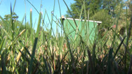 Stock Video Footage of Grass, Lawns, Stems, Plant Life, Nature, 2D, 3D