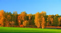 Autumn nature, landscape with green field and gold forest. Footage