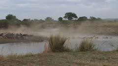 Wildebeests crossing a drying river Stock Footage
