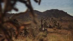 Joshua Trees - Slider Shot - stock footage