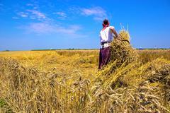 Stock Photo of Harvest
