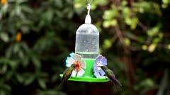 Green Throat Hummingbird_9776 Stock Footage