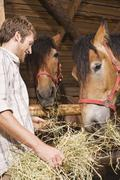 Farmer feeding hay to horses in stable, smiling, portrait - stock photo