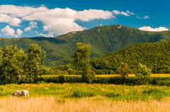 farm fields and view of the appalachians in the shenandoah valley, virginia. - stock photo