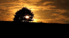 Tree Sihouette on Horizon during Beautiful Golden Sunset HD - stock footage
