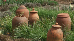 Terracotta containers with forced sea kale in kitchen garden Stock Footage