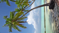 Coconut palm tree - stock footage