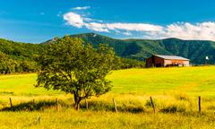 barn, tree and view of the appalachians in the shenandoah valley, virginia. - stock photo