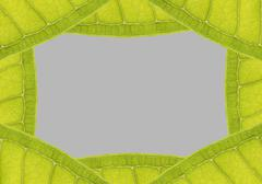 natural leaf frame with space for text on gray - stock photo