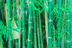 Japanese asian bamboo forest green Stock Photos
