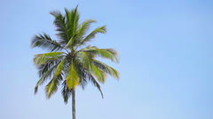 Swaying palm tree against the blue sky Stock Footage