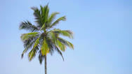 Stock Video Footage of swaying palm tree against the blue sky
