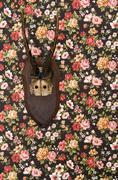 Deer antler on floral wallpaper Stock Photos