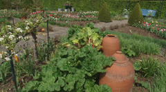 Forced rhubarb vegetable in kitchen garden - stock footage