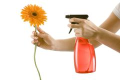Woman spraying water on a flower, close-up Stock Photos