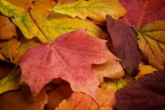 Different autumn leaves Stock Photos