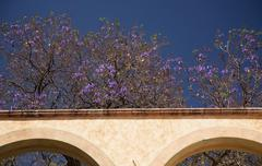 Purple flowers white adobe wall queretaro mexico Stock Photos